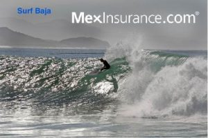 Surfing Mushrooms Baja